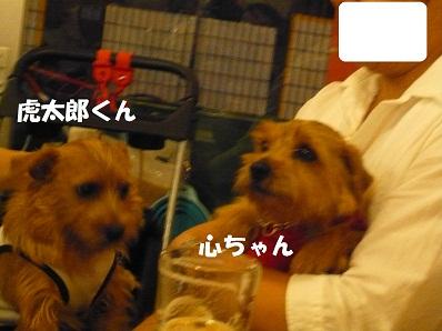 2012_0814_190902-P1060086a.jpg