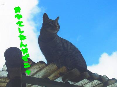 屋根の上のゆーべしー♪