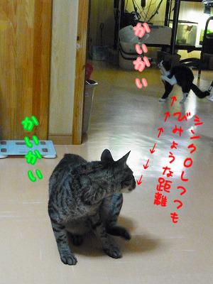 さてゆべとむーちーは微妙な距離を取りつつ仲良しです。
