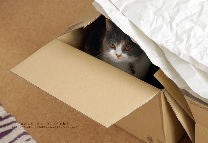 箱という箱