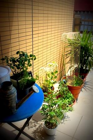 5月のお庭 (5)