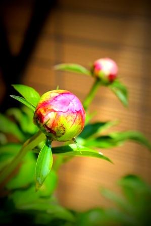 5月のお庭 (4)