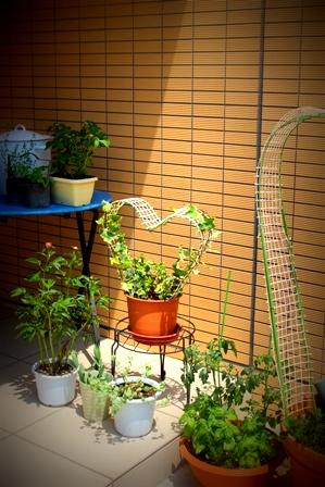 5月のお庭