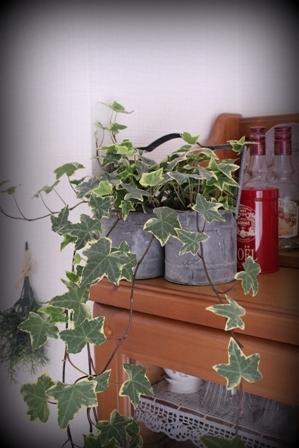 ガーデン 5月下旬 (10)