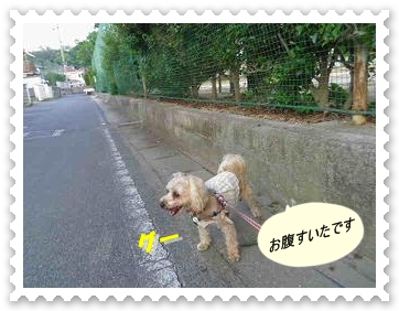 IMGP0665_20120531231447.jpg