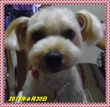 IMGP2367_20120630232757.jpg