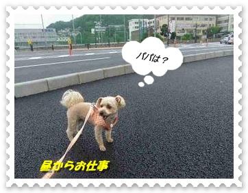 IMGP2396_20120701234132.jpg