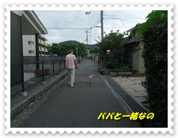 IMGP2752_20120708011500.jpg