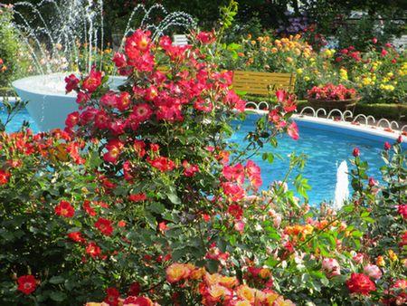 花巻バラ園1