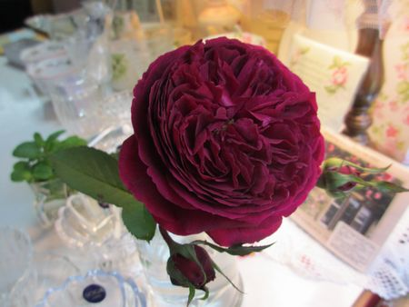 マジェンタのバラ2012・10