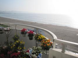 三浦海岸お花