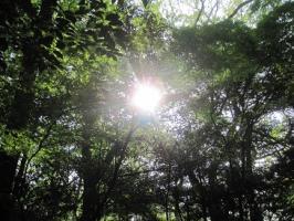 明治神宮太陽
