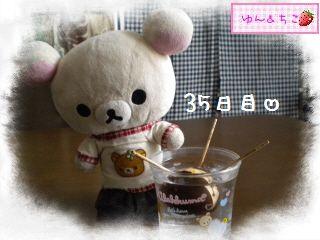 ちこちゃんのアボカド観察日記★5★29日~35日-1