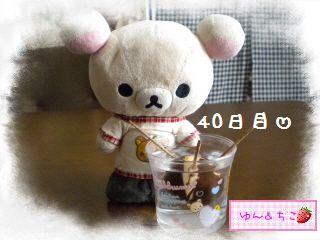 ちこちゃんのアボカド観察日記★6★36~42日目-1