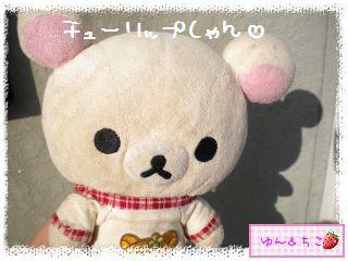 ちこちゃんのチューリップ観察日記★2★芽が増えた??-1