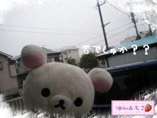 ちこちゃん日記★156★雪でしゅ~-1