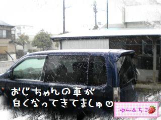 ちこちゃん日記★156★雪でしゅ~-3