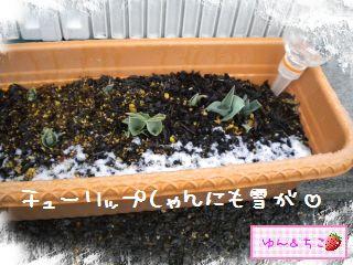 ちこちゃん日記★156★雪でしゅ~-6