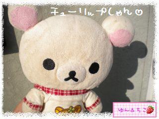 ちこちゃんのチューリップ観察日記★5★急成長-1