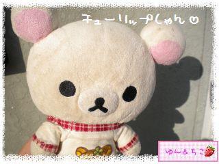 ちこちゃんのチューリップ観察日記★6★つぼみしゃん♪-1