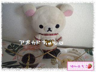 ちこちゃんのアボカド観察日記★11★71~77日目-1