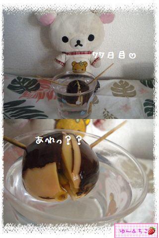 ちこちゃんのアボカド観察日記★11★71~77日目-3
