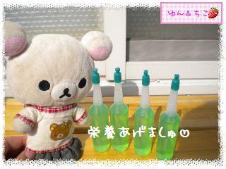 ちこちゃんのチューリップ観察日記★7★栄養あげりゅ♪-8
