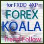 ForexKoala.jpg