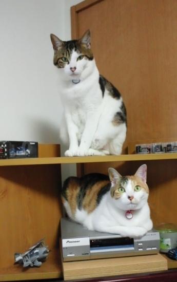ミント&ひま