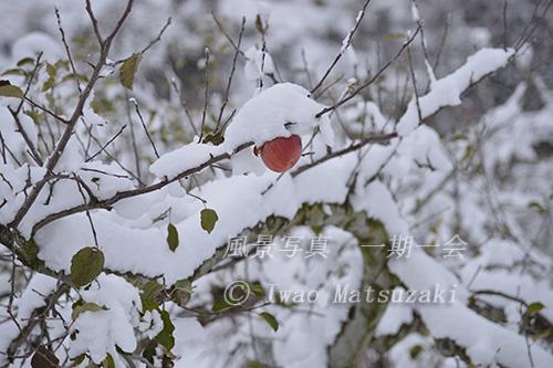 blg_雪かぶる-4