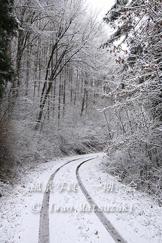 blg_雪の山道-2