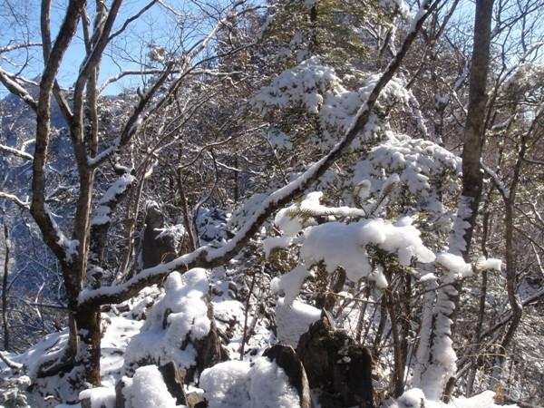 稲村岩コブ