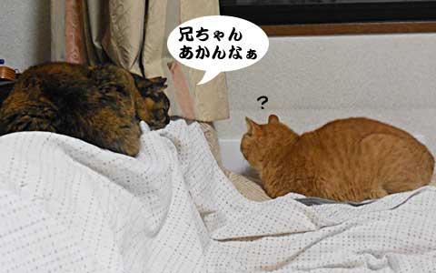 14_12_19_1.jpg