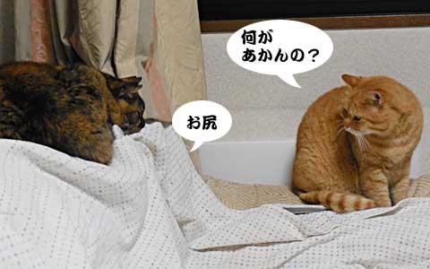 14_12_19_2.jpg