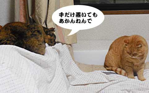 14_12_19_4.jpg