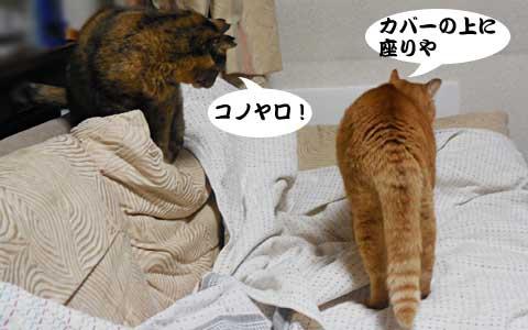 14_12_19_6.jpg