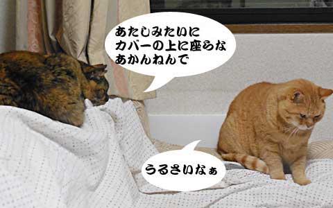 14_12_19_7.jpg