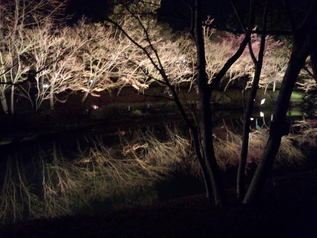 池にうつった姿が綺麗