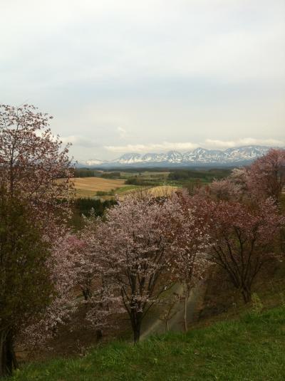 大雪山とさくら