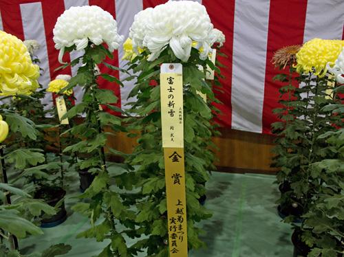 菊まつり1