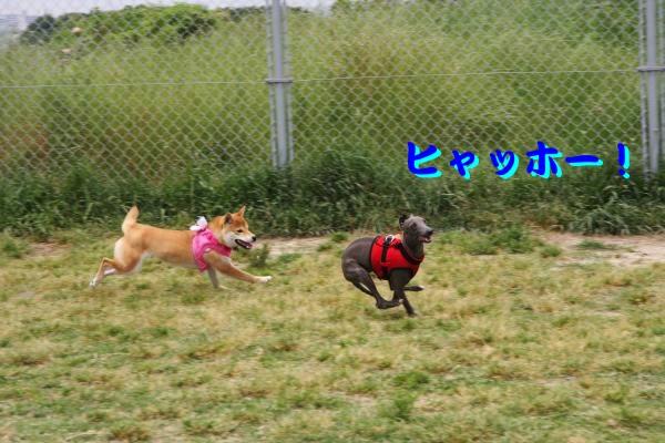 IMG_6723-1_convert_20120524210747.jpg