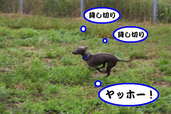 IMG_7961-1_convert_20120619153648.jpg