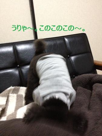 20130125170606eb6.jpg