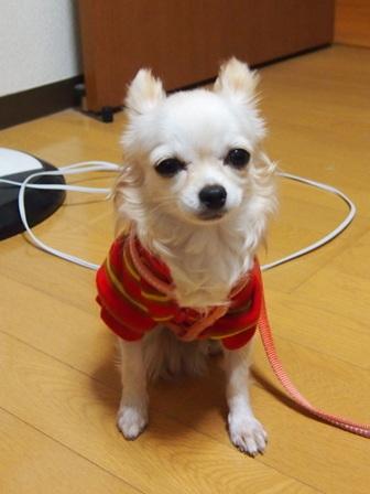 blog546.jpg