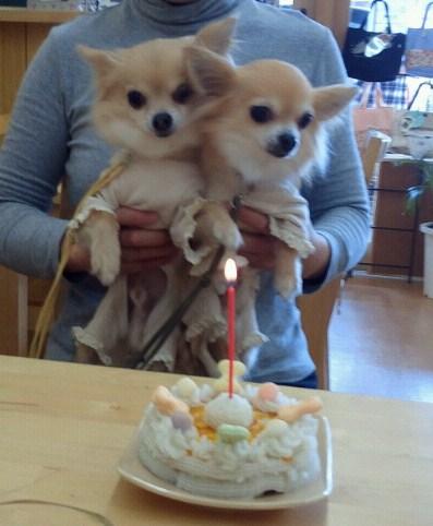 チィ君のお誕生日会