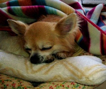 おねむのチィ君・枕