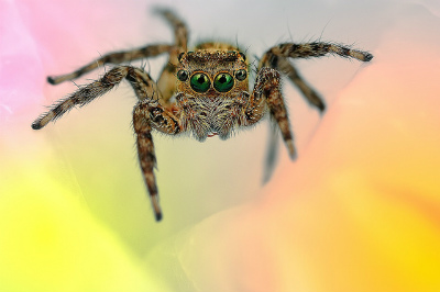 spider-by-Jimmy-Kong.jpg