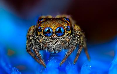 spider-photo-Jimmy-Kong.jpg