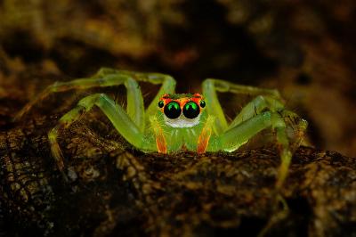 spider-photo.jpg