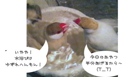 水浴び_3